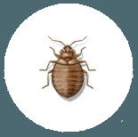 Commercial Buildings Exterminators Homes Pest Control