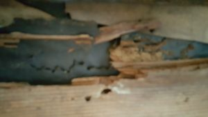 structural damage for carpenter ants