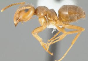moisture ants exterminators